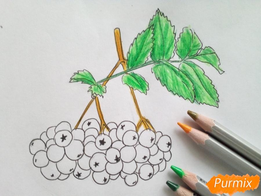 Рисуем лист рябины с ягодами - шаг 5