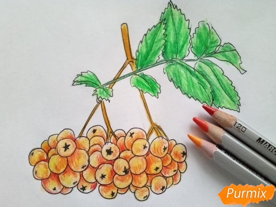 Рисуем лист рябины с ягодами - шаг 6