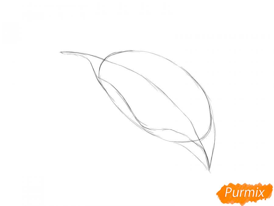Рисуем лист сливы - шаг 3