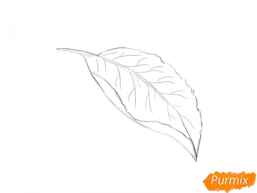 Рисуем лист сливы - шаг 4