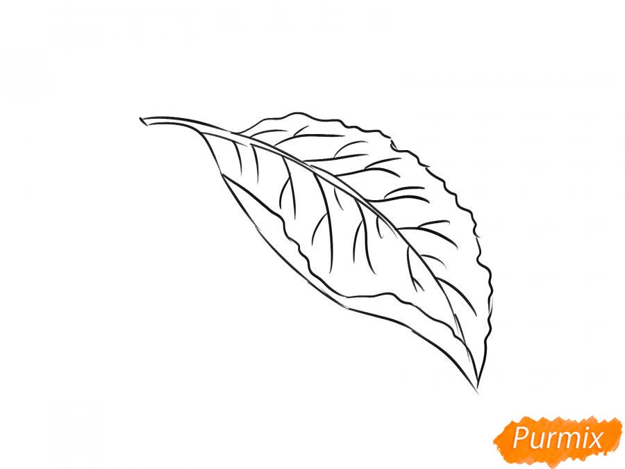 Рисуем лист сливы - шаг 5