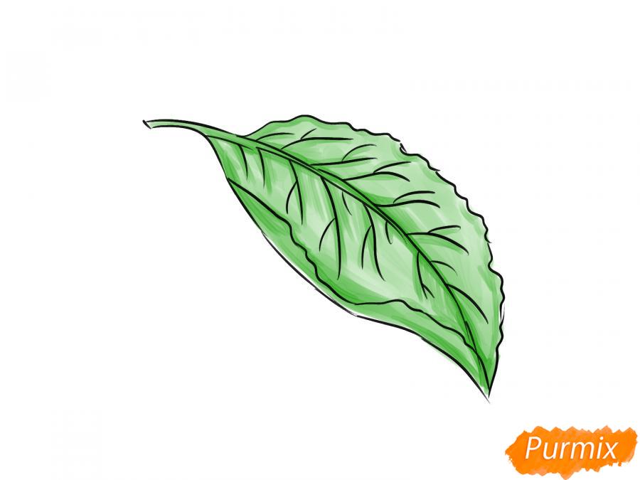 Рисуем лист сливы - шаг 6