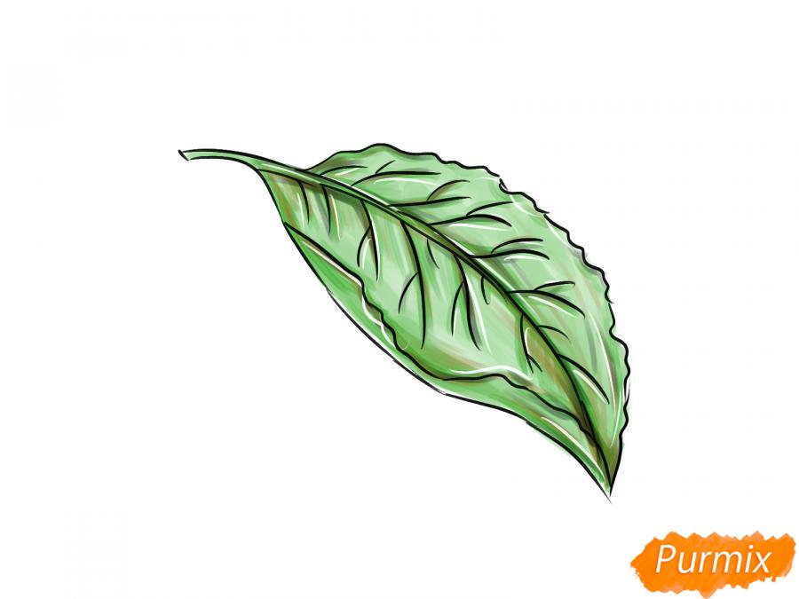 Рисуем лист сливы - шаг 7