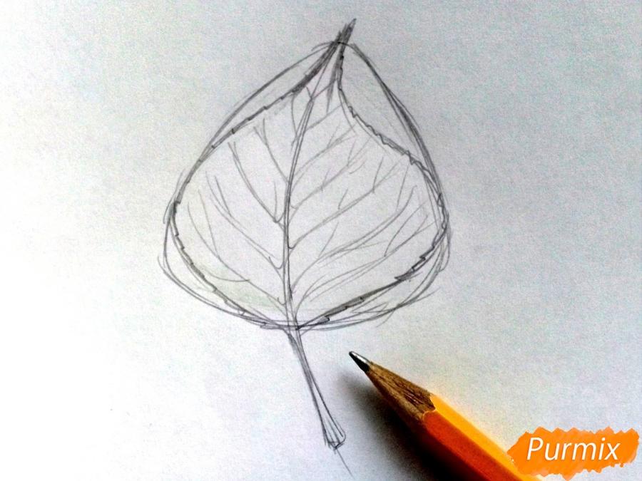 Рисуем лист тополя карандашами - шаг 3