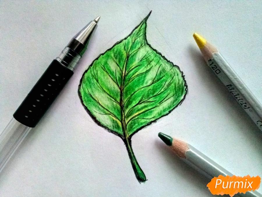 Рисуем лист тополя карандашами - шаг 7