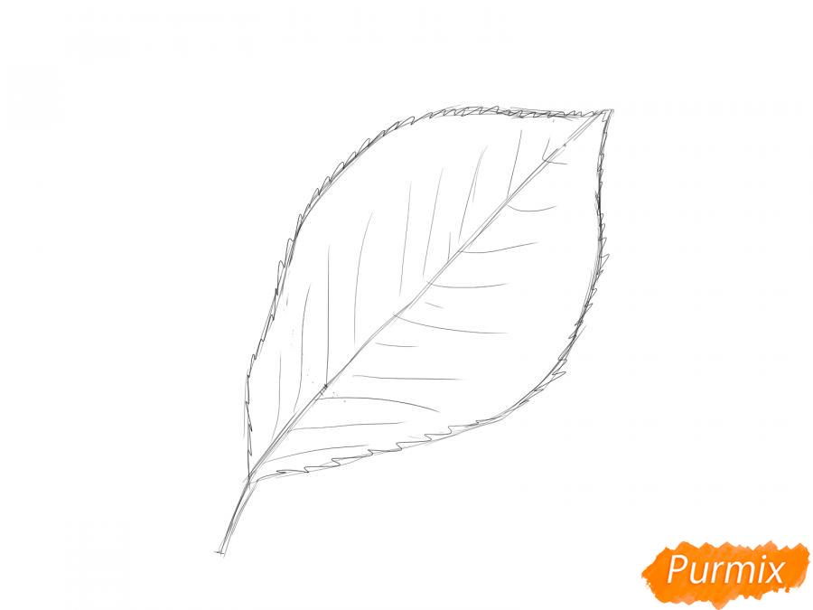 Рисуем лист вишни карандашами - шаг 3