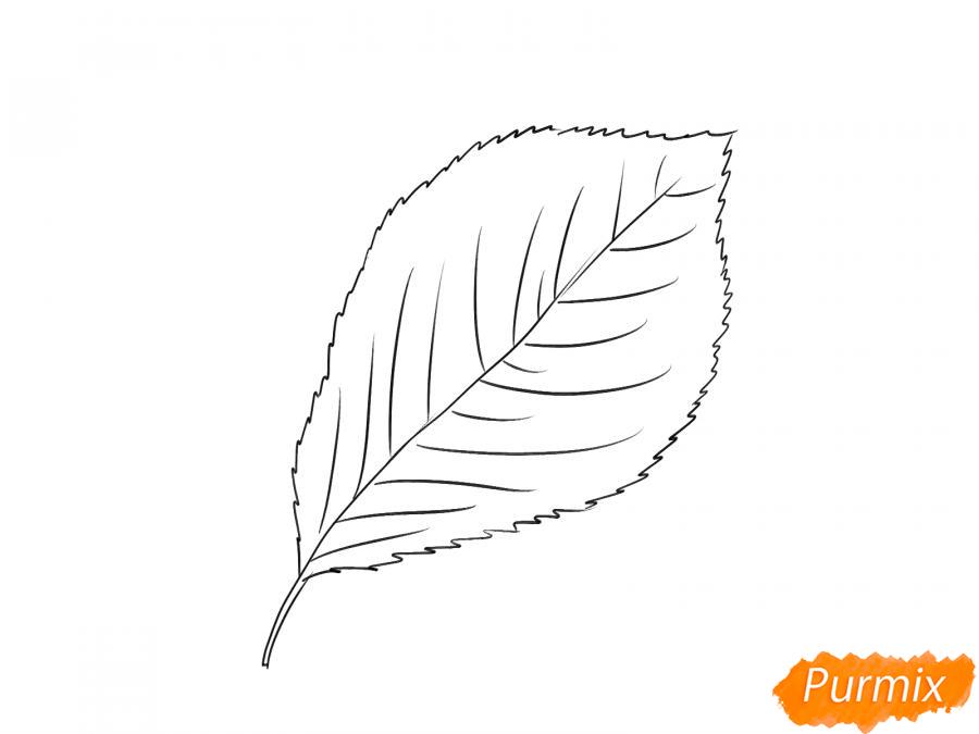 Рисуем лист вишни карандашами - шаг 4