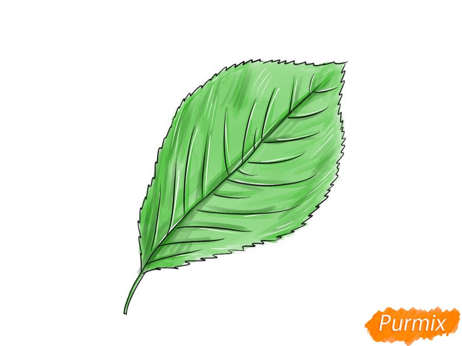 Рисуем лист вишни карандашами - шаг 5