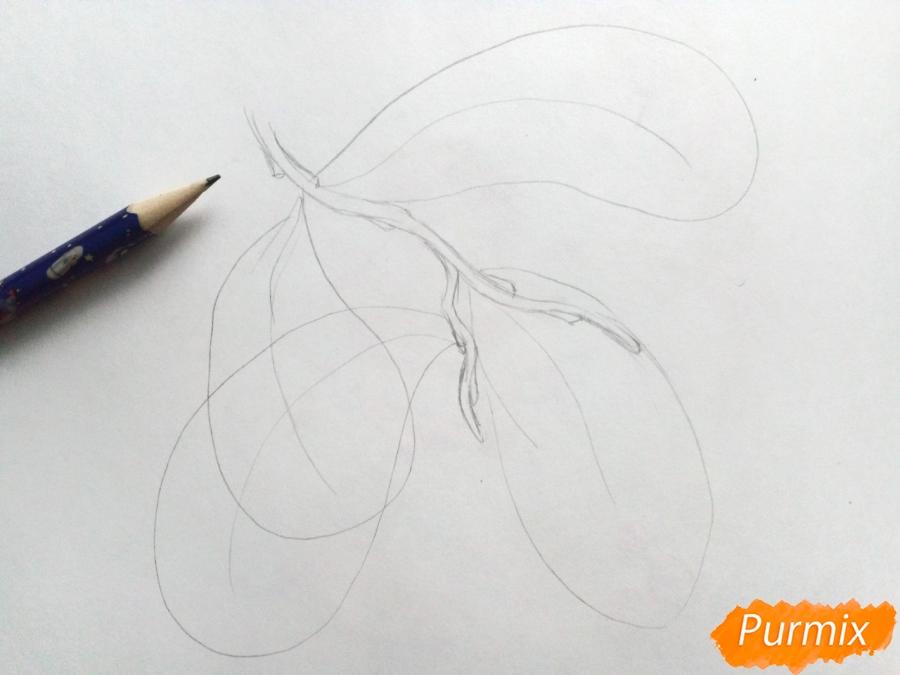 Рисуем листья рябины на ветке без ягод - шаг 1