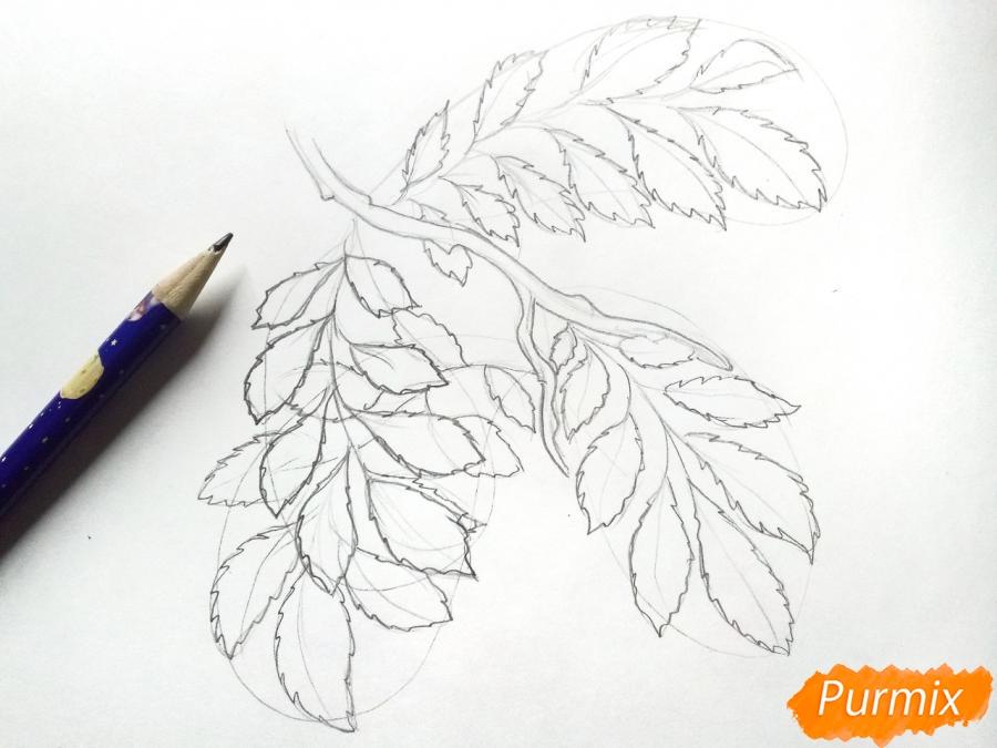 Рисуем листья рябины на ветке без ягод - шаг 3