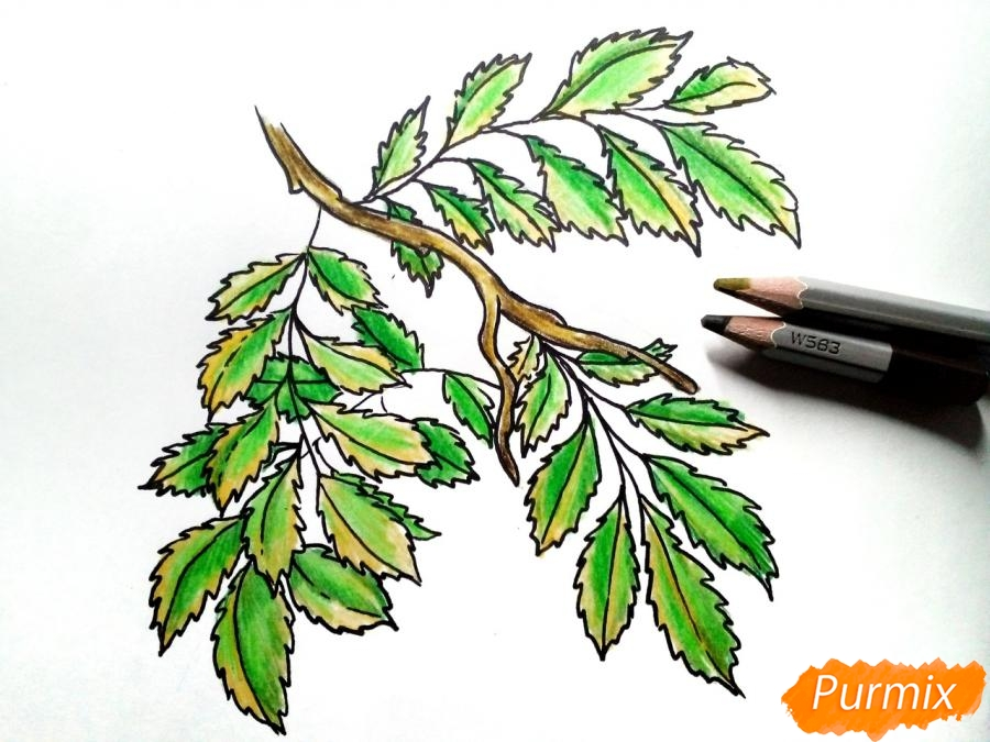 Рисуем листья рябины на ветке без ягод - шаг 6