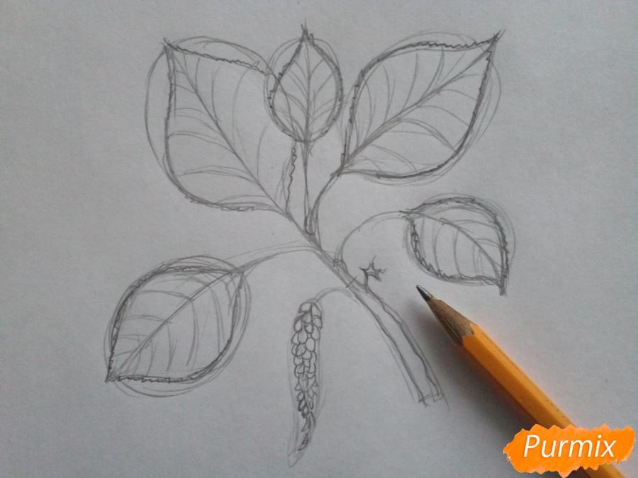 Рисуем листья тополя на ветке - шаг 3