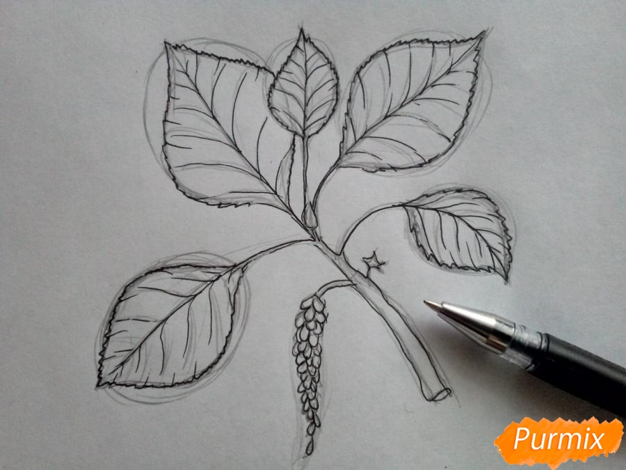 Рисуем листья тополя на ветке - шаг 4