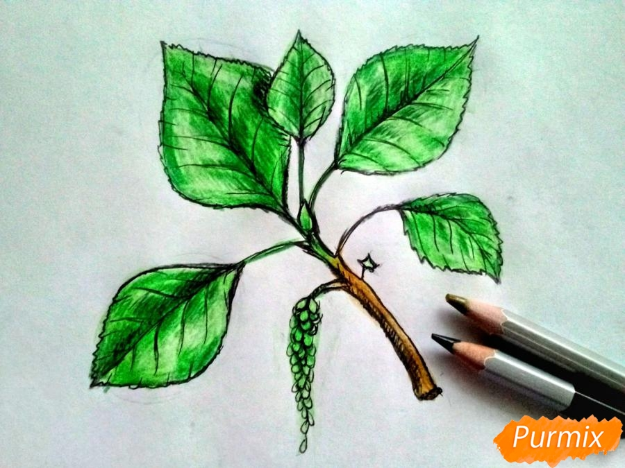 Рисуем листья тополя на ветке - шаг 6