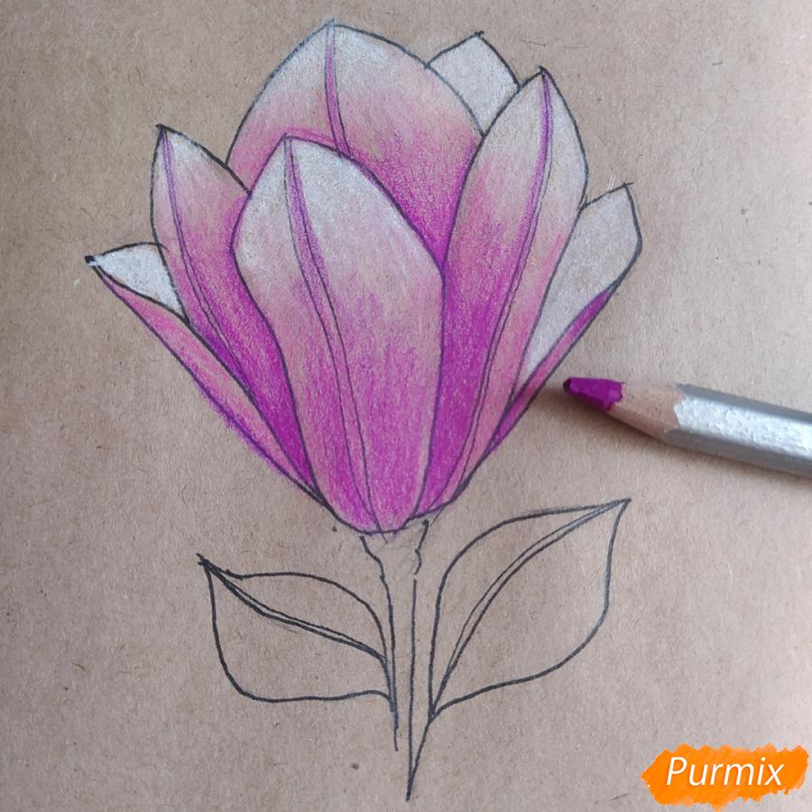 Как рисовать Магнолию карандашами - шаг 10