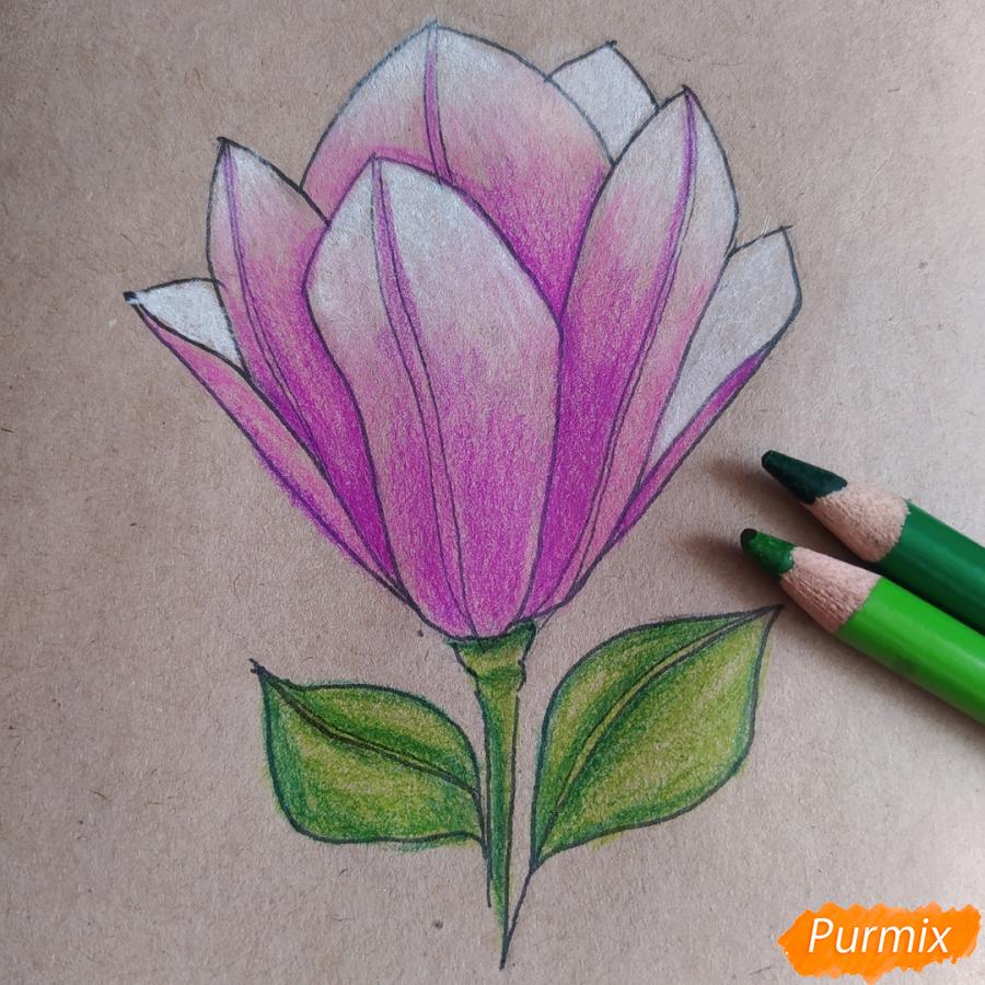 Как рисовать Магнолию карандашами - шаг 11