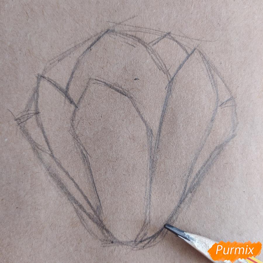 Как рисовать Магнолию карандашами - шаг 5