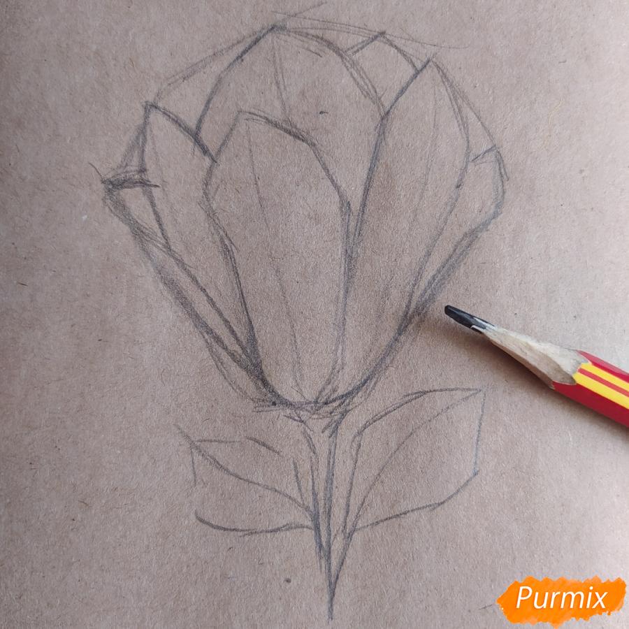 Как рисовать Магнолию карандашами - шаг 6