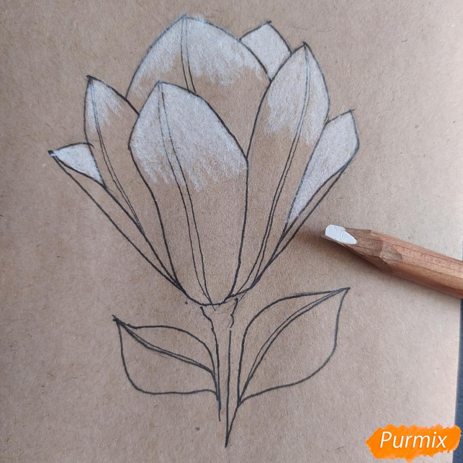Как рисовать Магнолию карандашами - шаг 8