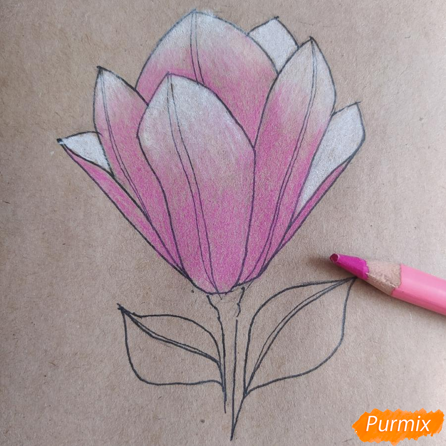Как рисовать Магнолию карандашами - шаг 9
