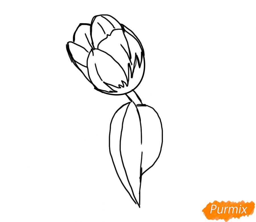 Рисуем один простой тюльпан - шаг 4