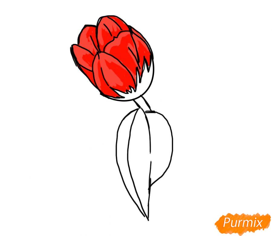 Рисуем один простой тюльпан - шаг 5