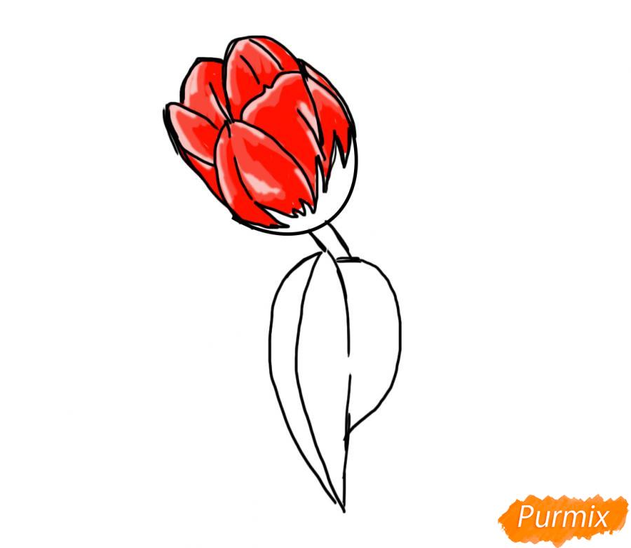 Рисуем один простой тюльпан - шаг 6