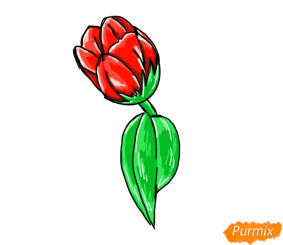 Рисуем один простой тюльпан - шаг 8