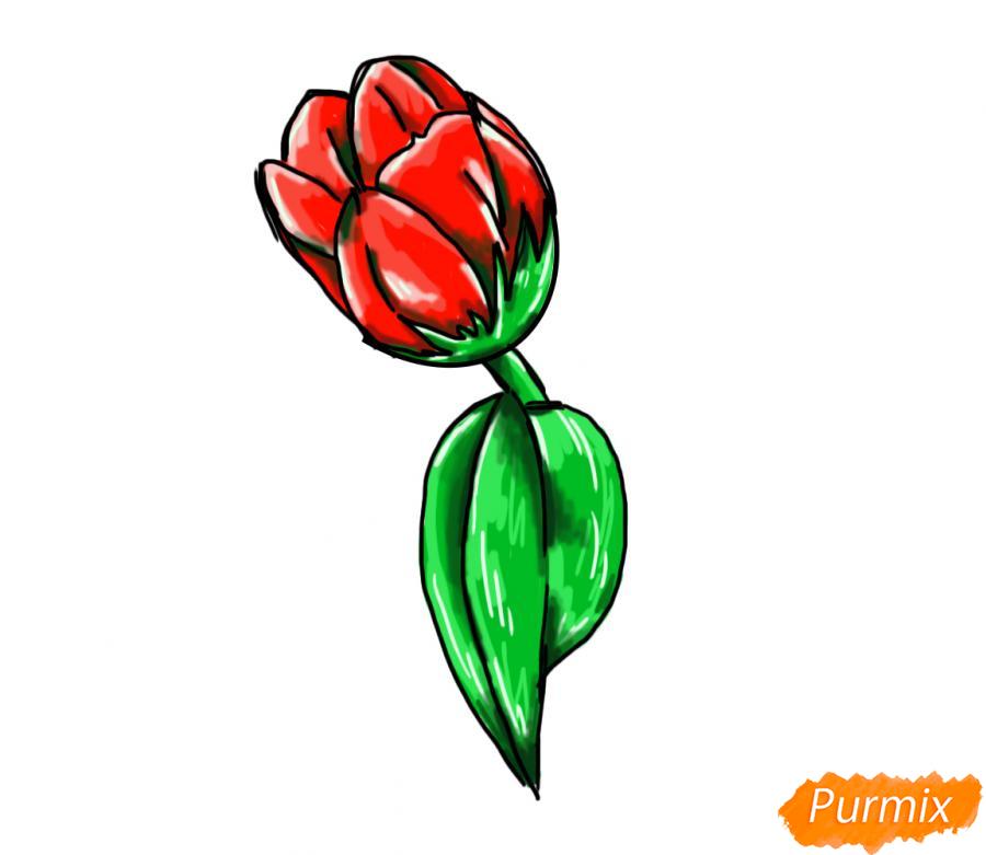 Рисуем один простой тюльпан - шаг 9