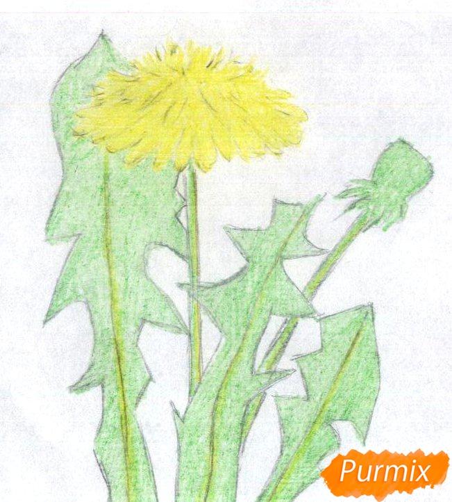 Рисуем одуванчик цветными карандашами - шаг 2