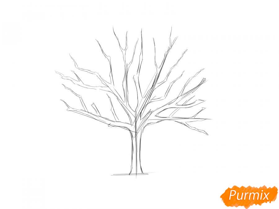 Рисуем ореховое дерево без листьев - шаг 3