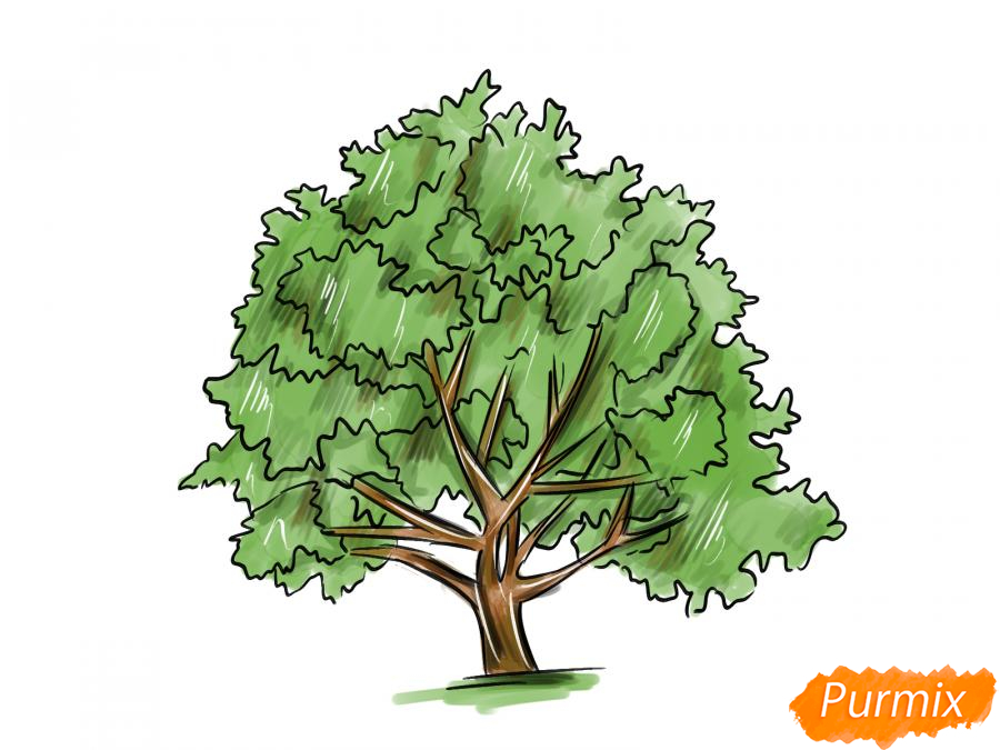 Рисуем ореховое дерево - шаг 10