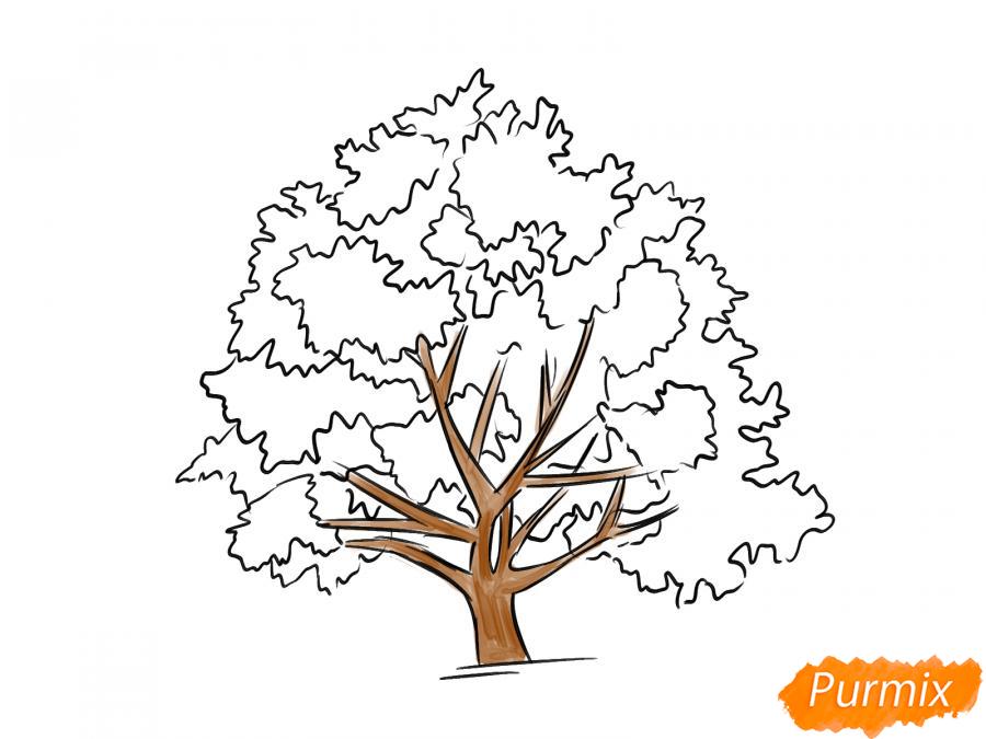 Рисуем ореховое дерево - шаг 7