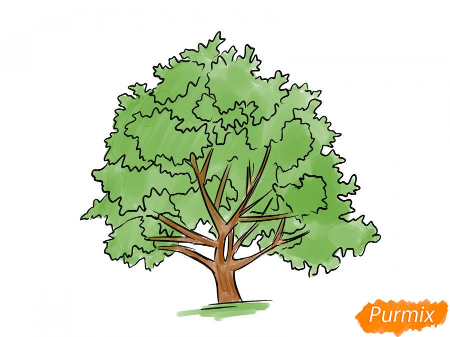 Рисуем ореховое дерево - шаг 8