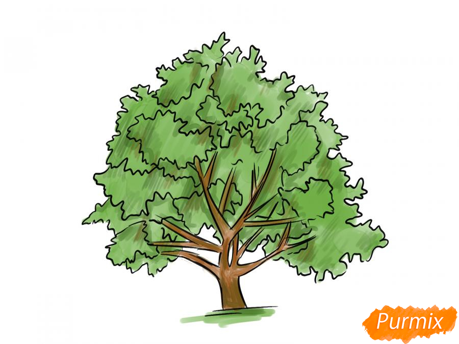 Рисуем ореховое дерево - шаг 9