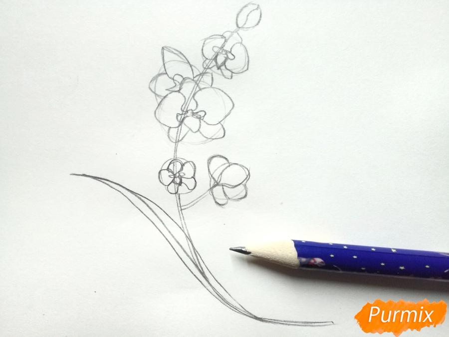 Рисуем веточку орхидеи для детей - шаг 3