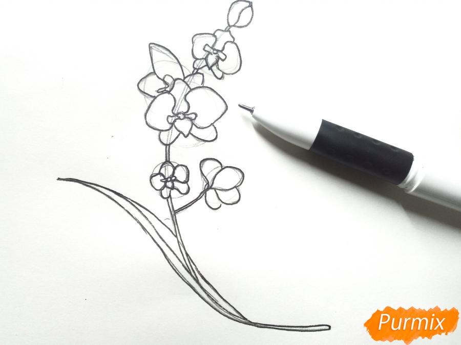 Рисуем веточку орхидеи для детей - шаг 4