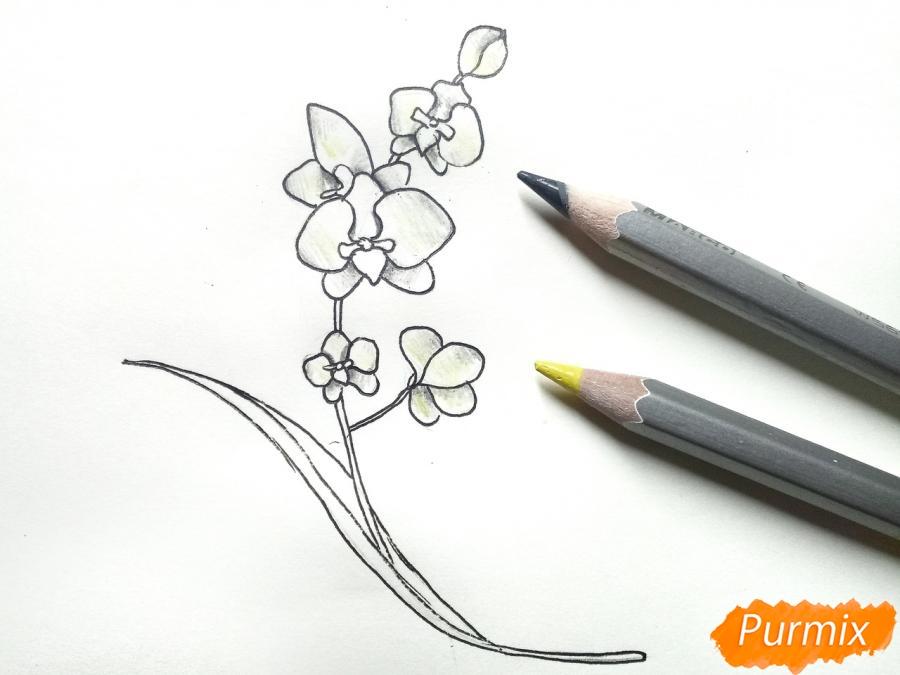 Рисуем веточку орхидеи для детей - шаг 5
