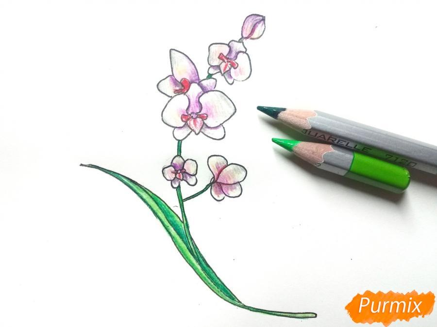 Рисуем веточку орхидеи для детей - шаг 7
