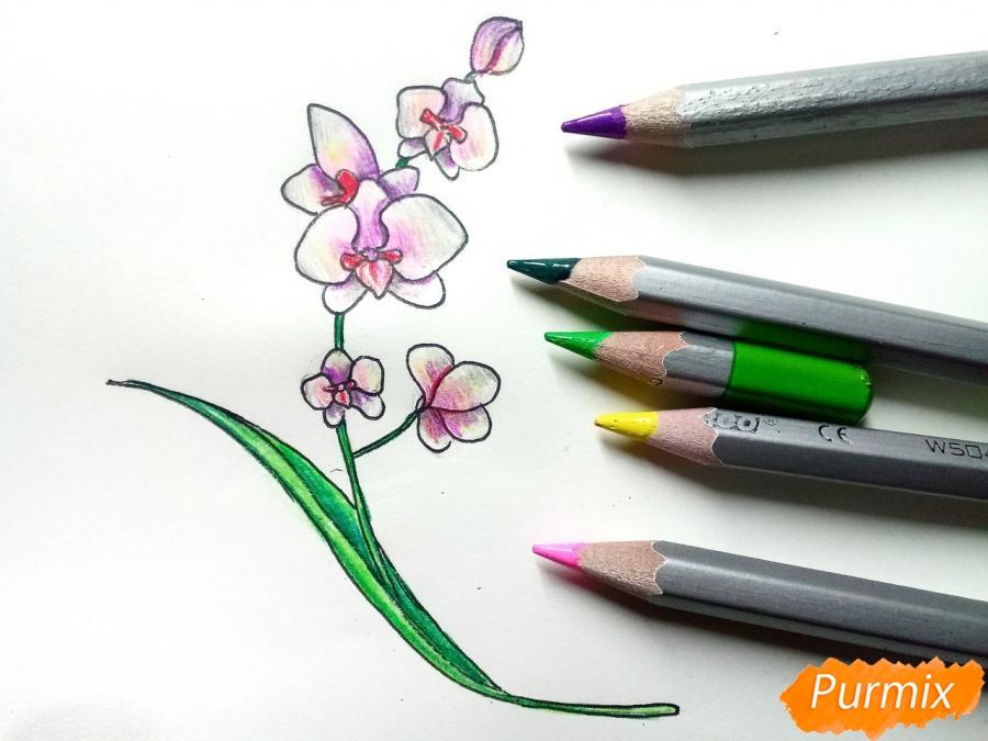 Рисуем веточку орхидеи для детей - шаг 8