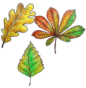 Фото осенние листья карандашом