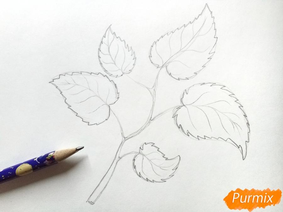 Рисуем осеннюю ветку с листьями - шаг 3