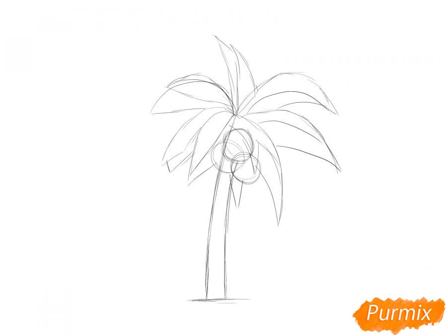 Рисуем пальму с кокосами - шаг 3