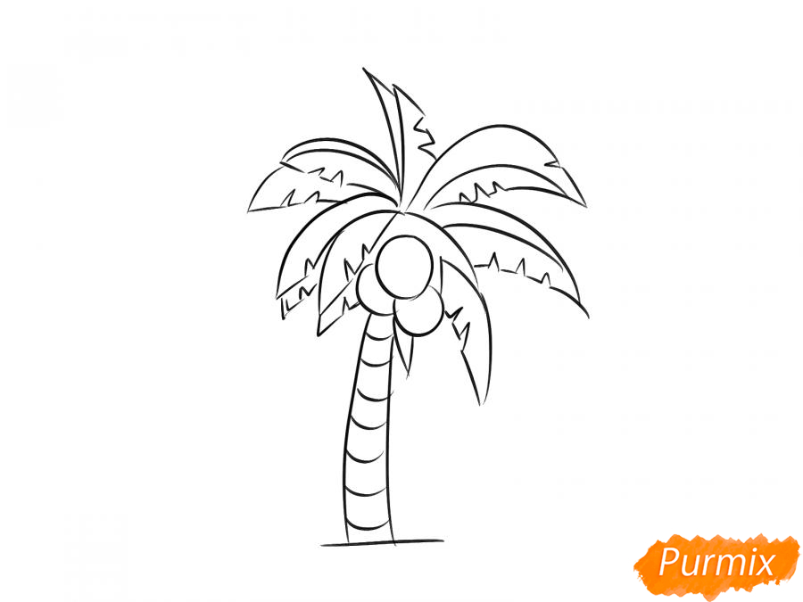 Рисуем пальму с кокосами - шаг 6