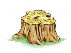 пень от дерева