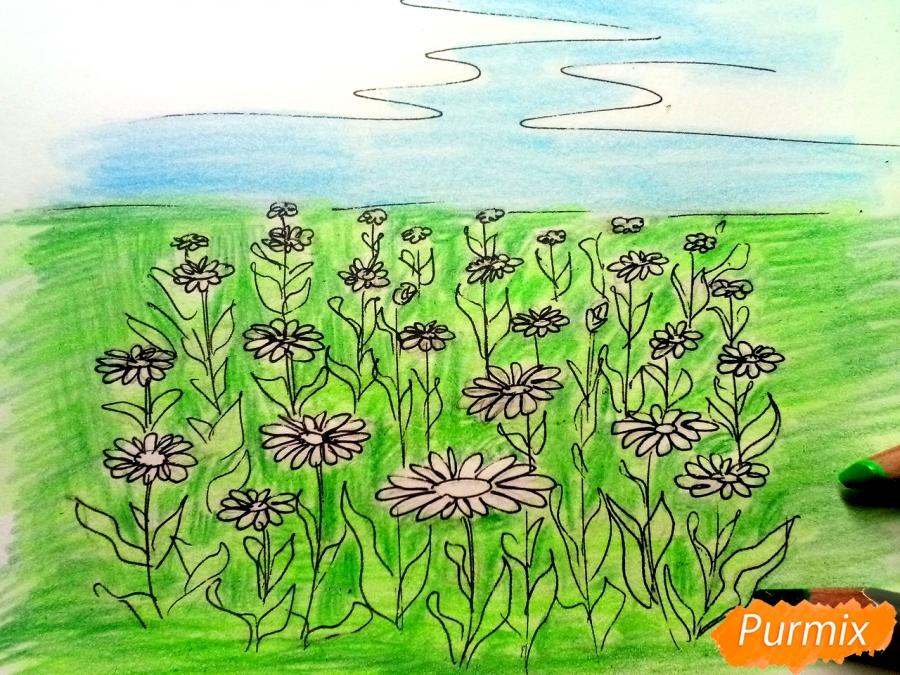 Рисуем поле ромашек карандашами - шаг 6