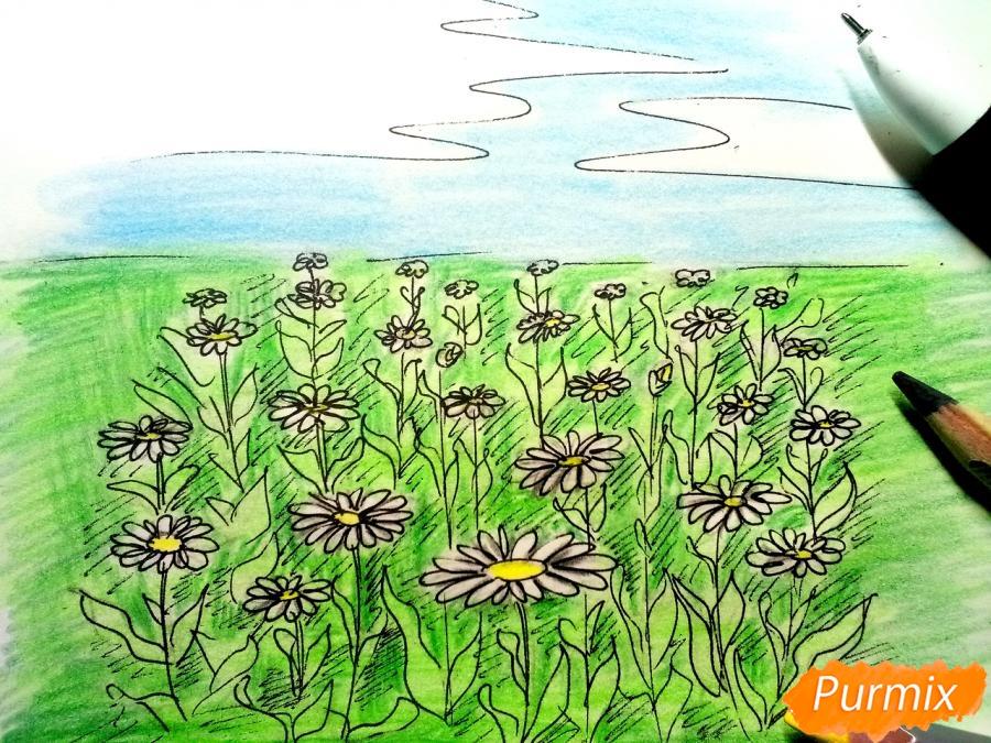 Как нарисовать поле ромашек карандашами поэтапно