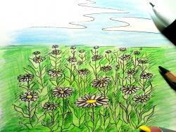 Фото поле ромашек