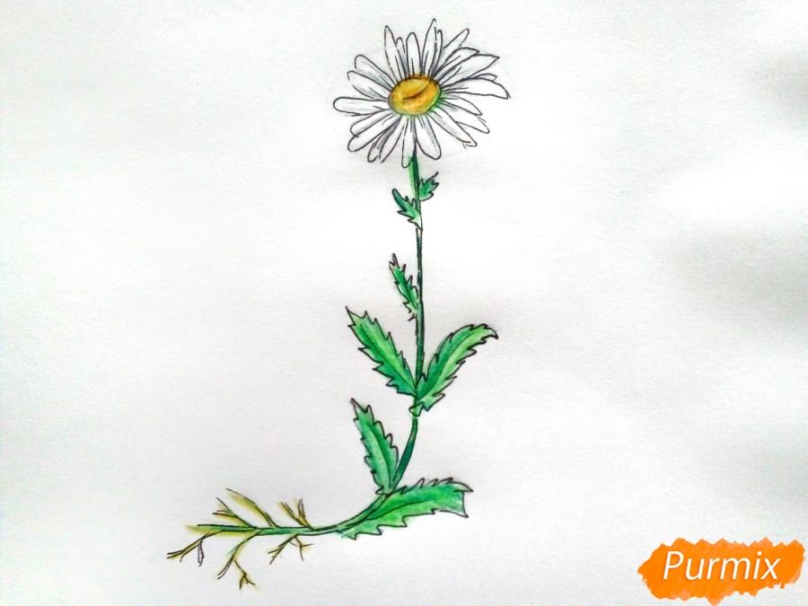 Ромашка с корнем - шаг 9