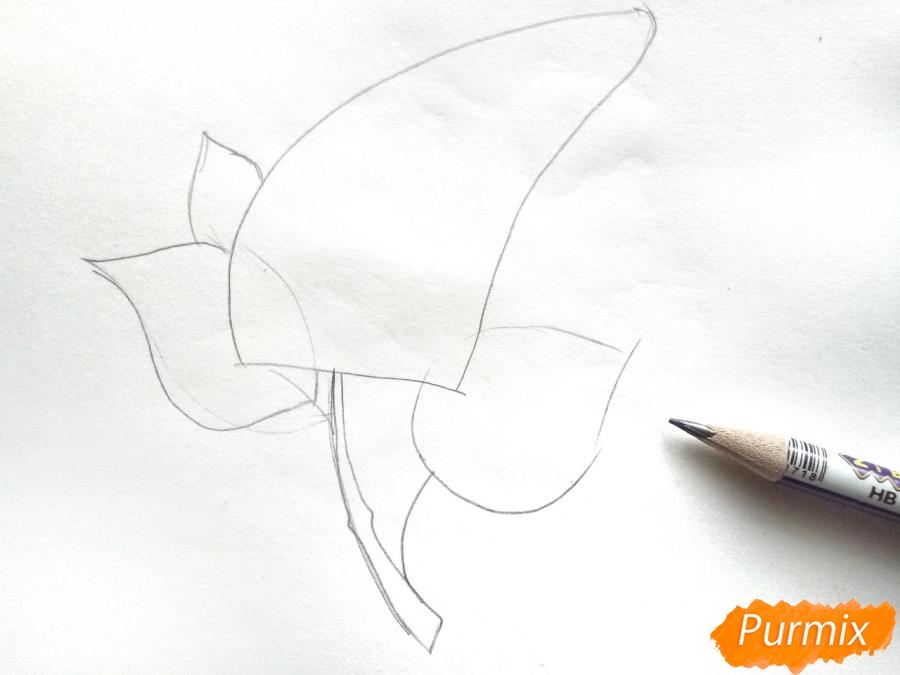 Рисуем сирень карандашами - шаг 2